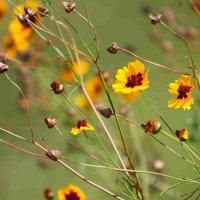 Цветы :: Lana Sergeeva