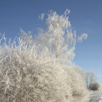 Зима :: Андрей Студеникин