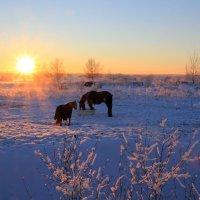 Пейзаж с лошадками :: Aнна Зарубина