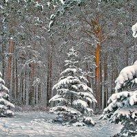 снежно :: зоя полянская