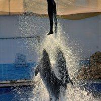 Дельфины :: Владимир KVN