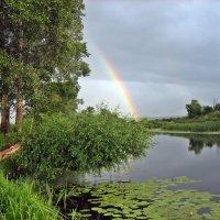 Лесное озеро после дождя :: Владимир Арефьев