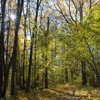 Осенние тропы... :: Дмитрий Гортинский