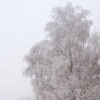 Февраль! :: Олег Полянский