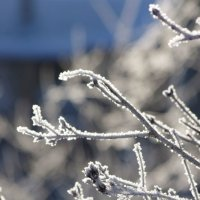 Легкий морозец -33 :: Евгения Воронина