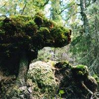 Хозяин леса :: Валерий Талашов