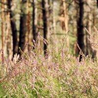 Цветы :: Виктория Дубровская