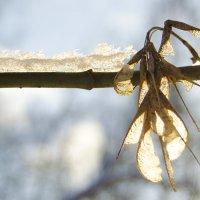 Мороз и солнце :: Татьяна