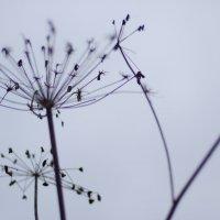Про одиночество... :: Митя Шишкин