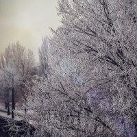 Зимние деревья :: Олег Маленький