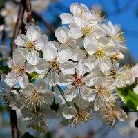 Весна не за горами! :: Victor Klyuchev