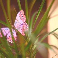 бабочка :: елена брюханова