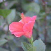 Цветок :: redfox