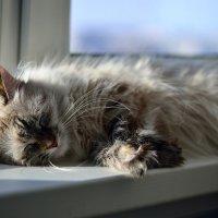 .....я на солнышке лежу, и морозы не страшны! :: Ольга Стёпочкина
