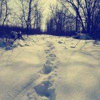 Снег :: Коля Левоненко