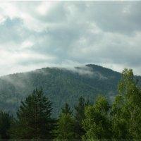 А в тайге по утрам туман :: galina tihonova