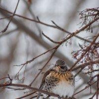 птички :: Андрей Липов