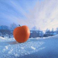 Яблоко на снегу :: Валерий Талашов