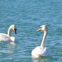лебеди :: Katerina Sheglova