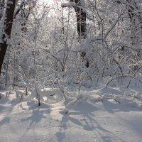 зима :: Михаил Голубев