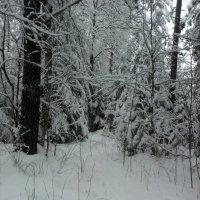 лес :: Елена Чубарова