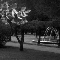 Таврический летний :: sv.kaschuk