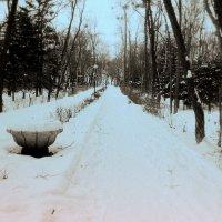 Зимняя аллея :: Лилия Гиндулина