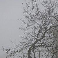 Рифмы: люди и деревья :: Людмила Синицына