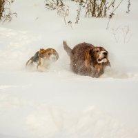 Собачья олимпиада. Спринт. :: Дмитрий Марков