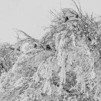 птицы зимой :: Арсений Корицкий