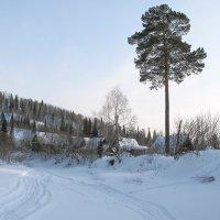 Таежный пейзаж :: Нина северянка