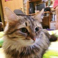 Зимние коты :: Андрей Мишин