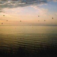 Птицы в небе :: Татьяна Кулаковская