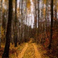 Дорога в лесу. :: Владимир Михеев