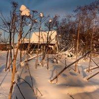 Зима в Мураново :: Евгений Жиляев