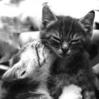 Котята :: Ольга Волкова