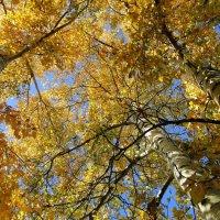 Осень :: Сергей Сухумский