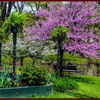 Царство красок и цветов :: Яков Геллер