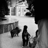 Коты и Форос :: Ольга Мальцева