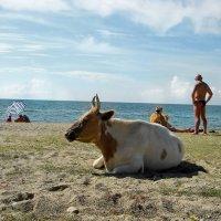 Коровка на пляже :: Анастасия Макрушина