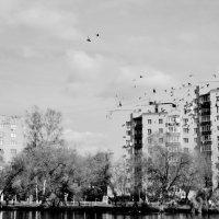 Город. Пруд. Птицы. :: Ольга Кривых