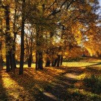 Осень в Монрепо /5 :: Евгений Плетнев