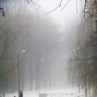 В плену тумана :: Дарина Mads