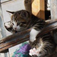 Кошки :: Ольга Волкова