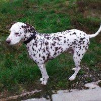 Мой собака Цезарь :: Александр Жуков