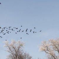 ..улетают из неба птицы... :: Александр Герасенков