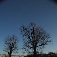 в деревне зимой :: alecs tyalin
