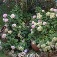 Цветы :: Клава Гоголева