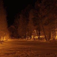 Ночной парк. :: Николай
