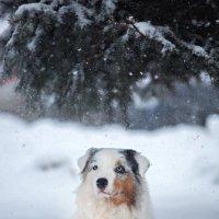Вчерашний снег :: Анастасия Ласская